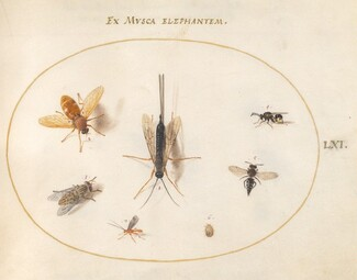 Animalia Rationalia et Insecta (Ignis):  Plate LXI