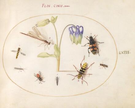 Animalia Rationalia et Insecta (Ignis):  Plate LXIII