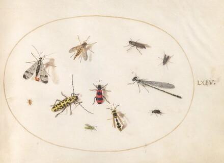 Animalia Rationalia et Insecta (Ignis):  Plate LXIV