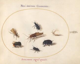 Animalia Rationalia et Insecta (Ignis):  Plate LXVII