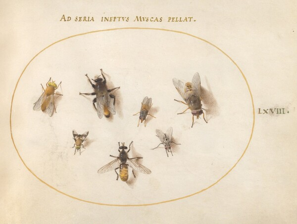 Animalia Rationalia et Insecta (Ignis):  Plate LXVIII