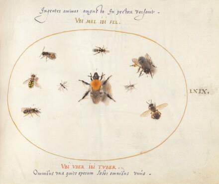 Animalia Rationalia et Insecta (Ignis):  Plate LXIX
