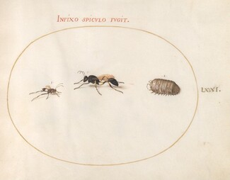 Animalia Rationalia et Insecta (Ignis):  Plate LXXI