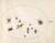 Animalia Rationalia et Insecta (Ignis):  Plate LXXII