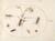 Animalia Rationalia et Insecta (Ignis):  Plate LXXVI