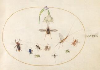 Animalia Rationalia et Insecta (Ignis):  Plate LXXVII