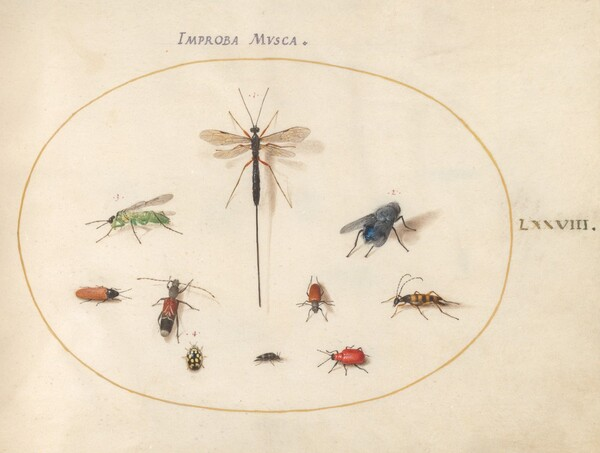 Animalia Rationalia et Insecta (Ignis):  Plate LXXVIII