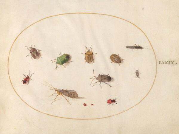 Animalia Rationalia et Insecta (Ignis):  Plate LXXIX