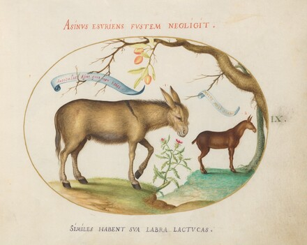 Animalia Qvadrvpedia et Reptilia (Terra): Plate IX