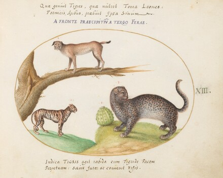 Animalia Qvadrvpedia et Reptilia (Terra): Plate XIII