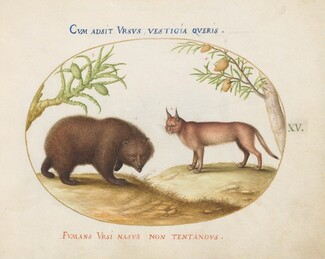 Animalia Qvadrvpedia et Reptilia (Terra): Plate XV