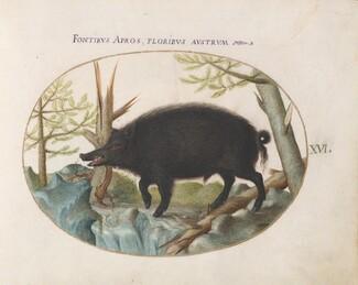 Animalia Qvadrvpedia et Reptilia (Terra): Plate XVI