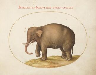Animalia Qvadrvpedia et Reptilia (Terra): Plate I