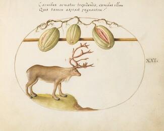 Animalia Qvadrvpedia et Reptilia (Terra): Plate XXI