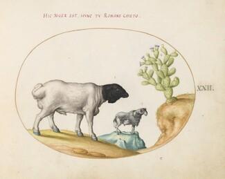 Animalia Qvadrvpedia et Reptilia (Terra): Plate XXII