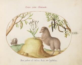 Animalia Qvadrvpedia et Reptilia (Terra): Plate XXIII
