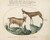 Animalia Qvadrvpedia et Reptilia (Terra): Plate XXV