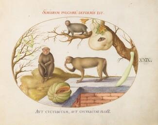 Animalia Qvadrvpedia et Reptilia (Terra): Plate XXIX