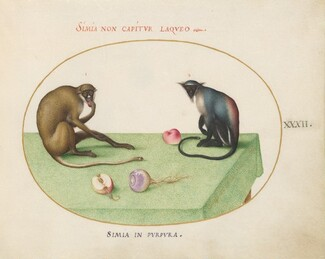 Animalia Qvadrvpedia et Reptilia (Terra): Plate XXXII