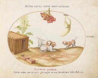 Animalia Qvadrvpedia et Reptilia (Terra): Plate XXXIX