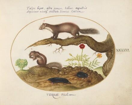 Animalia Qvadrvpedia et Reptilia (Terra): Plate XLVI