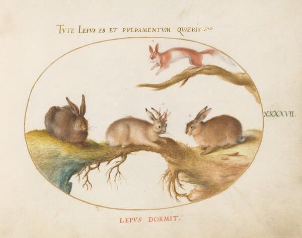 Animalia Qvadrvpedia et Reptilia (Terra): Plate XLVII
