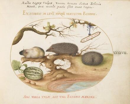 Animalia Qvadrvpedia et Reptilia (Terra): Plate XLVIII
