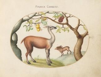 Animalia Qvadrvpedia et Reptilia (Terra): Plate IV