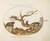 Animalia Qvadrvpedia et Reptilia (Terra): Plate XLIX
