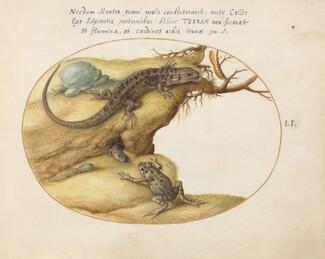 Animalia Qvadrvpedia et Reptilia (Terra): Plate LI