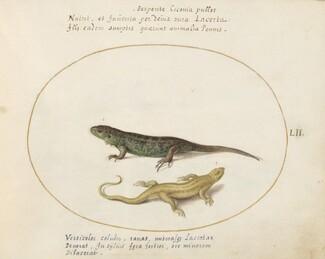 Animalia Qvadrvpedia et Reptilia (Terra): Plate LII