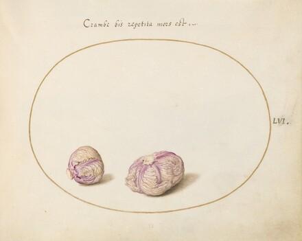 Animalia Qvadrvpedia et Reptilia (Terra): Plate LVI