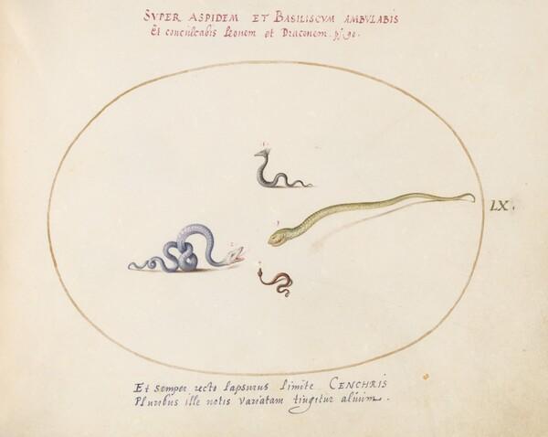 Animalia Qvadrvpedia et Reptilia (Terra): Plate LX