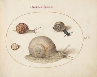 Animalia Qvadrvpedia et Reptilia (Terra): Plate LXI