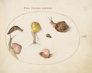 Animalia Qvadrvpedia et Reptilia (Terra): Plate LXII