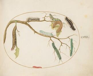 Animalia Qvadrvpedia et Reptilia (Terra): Plate LXVII