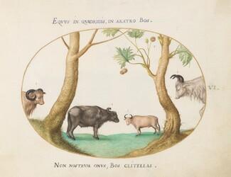 Animalia Qvadrvpedia et Reptilia (Terra): Plate VI