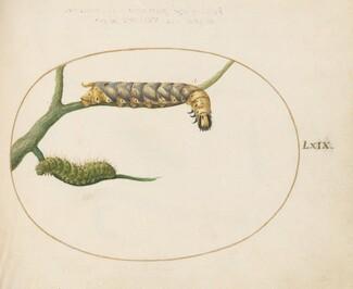 Animalia Qvadrvpedia et Reptilia (Terra): Plate LXIX