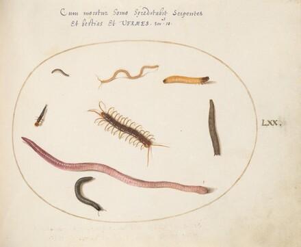 Animalia Qvadrvpedia et Reptilia (Terra): Plate LXX