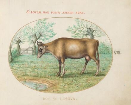 Animalia Qvadrvpedia et Reptilia (Terra): Plate VIII