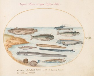 Animalia Aqvatilia et Cochiliata (Aqva): Plate XVII