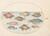 Animalia Aqvatilia et Cochiliata (Aqva): Plate XVIII
