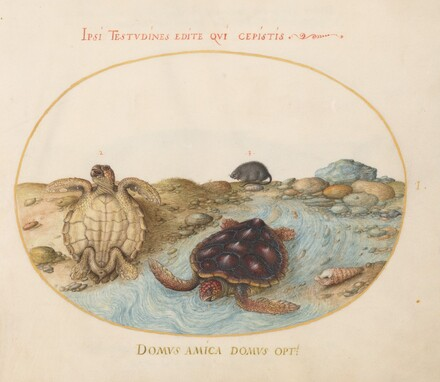 Animalia Aqvatilia et Cochiliata (Aqva): Plate I