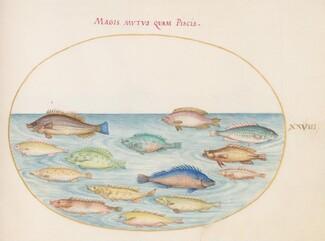 Animalia Aqvatilia et Cochiliata (Aqva): Plate XXVIII