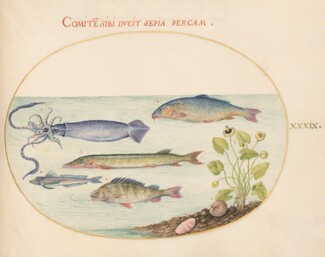 Animalia Aqvatilia et Cochiliata (Aqva): Plate XXXIX