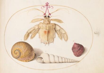 Animalia Aqvatilia et Cochiliata (Aqva): Plate L