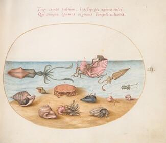 Animalia Aqvatilia et Cochiliata (Aqva): Plate LII