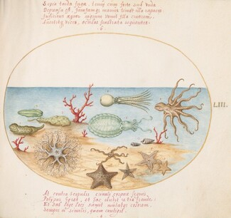 Animalia Aqvatilia et Cochiliata (Aqva): Plate LIII