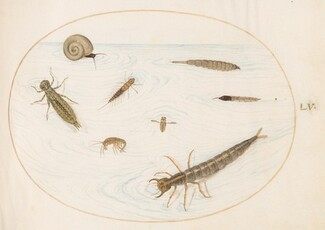 Animalia Aqvatilia et Cochiliata (Aqva): Plate LV