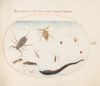 Animalia Aqvatilia et Cochiliata (Aqva): Plate LVI